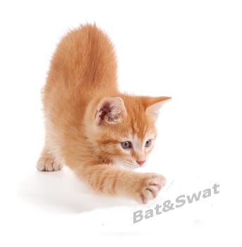 Bat&Swat Cat Toys