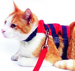 Cat WalkingJacket