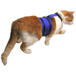 Cat with WalkingJacket in blue